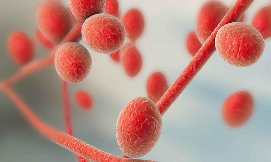 Що потрібно знати про Trichophyton rubrum - ергостерол